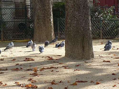 PIgeons dans le parc.jpg