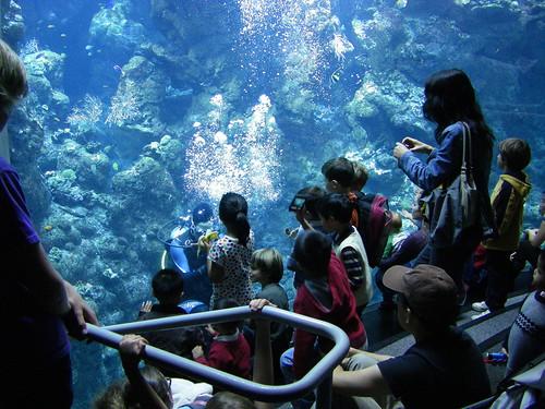 Steinhart Aquarium, SF, CA 11/11/10