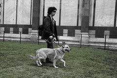 Real Photoshop (guido.masi) Tags: dog cane canon eos florence masi erba firenze battistero guido piazzaduomo guidomasi sanzanobi