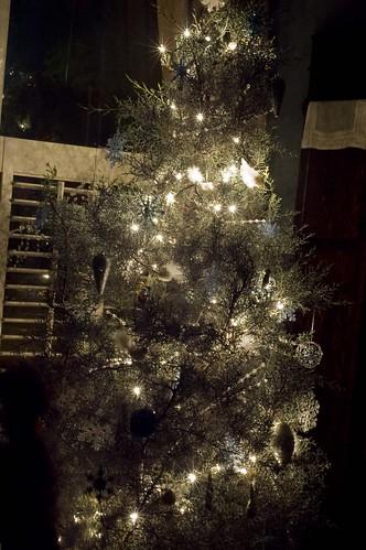 mms tree_0031