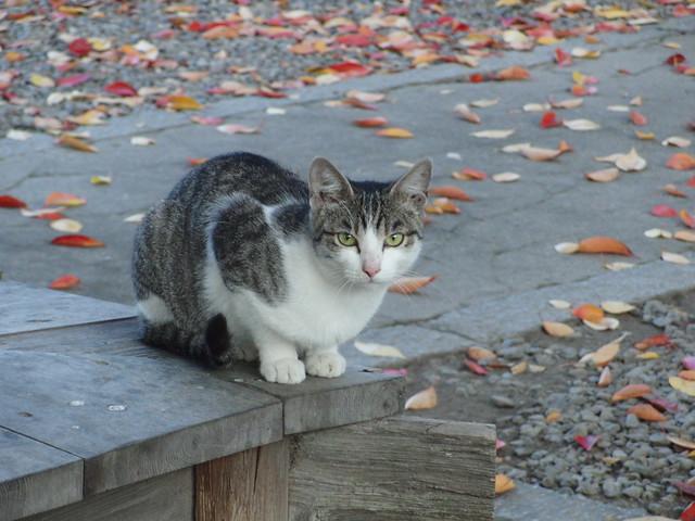 Today's Cat@2010-11-20
