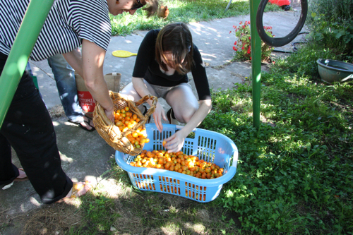 Yes - there were a lot of cumquats