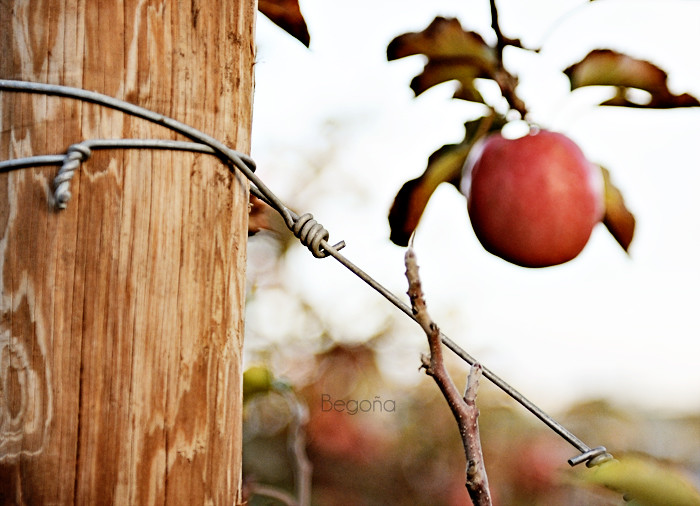 La fruta prohibida