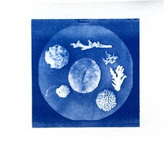 corals (akki14) Tags: vintage slides cyanotype dupe altprocess ortholithofilm