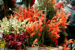 IMG_1303 (asadjaved) Tags: new india flower place market circus delhi mandi rajiv connaught chowk phool