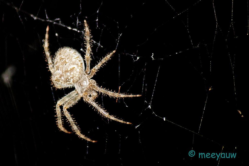 spider04.jpg