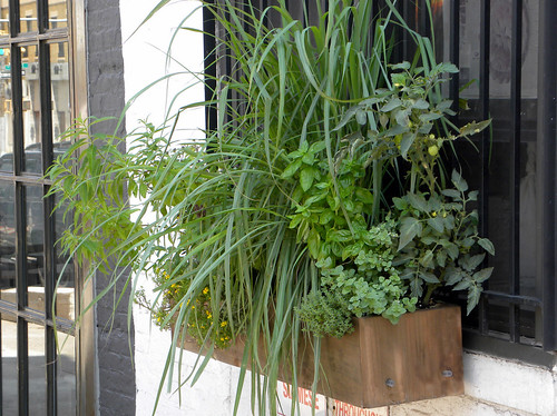 Brooklyn Pie Shop Window Boxes Become Sub-irrigated Planters (SIPs)