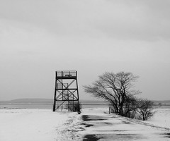End of the Road (Dendroica cerulea) Tags: blackandwhite bw tree tower ma essexcounty structure plumisland observationtower parkerrivernationalwildliferefuge