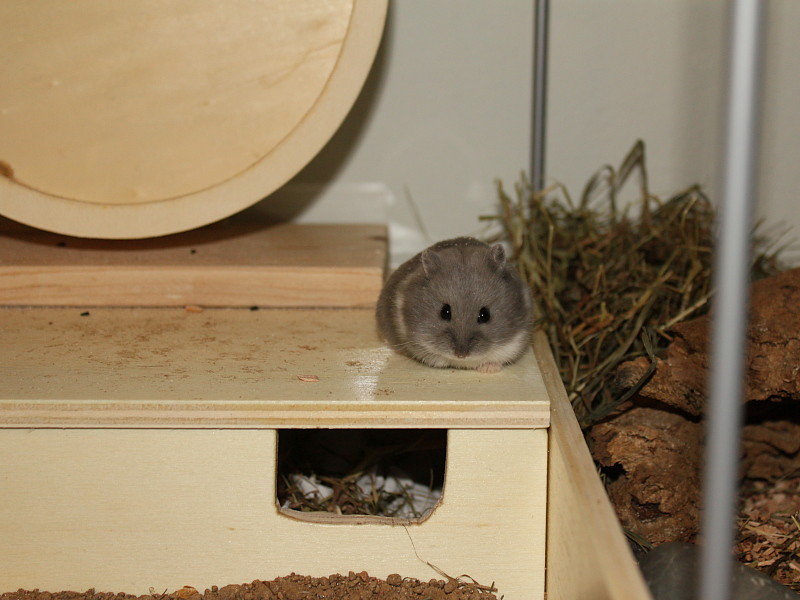 The World's Best Photos of hamster and ikea - Flickr Hive Mind