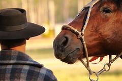 Amigos inseparveis (Alberto Nogueira Jr) Tags: friends horse hat galope httpwwwalbertonogueiracom