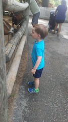 """Paul at the Deanna Rose Children's Farmstead • <a style=""""font-size:0.8em;"""" href=""""http://www.flickr.com/photos/109120354@N07/35567814611/"""" target=""""_blank"""">View on Flickr</a>"""