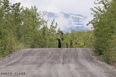 alaska toutr day 5 (1 of 18) (Photo-Flare) Tags: alaska ny newyork personalvacationphotographer phototours photographyfortravelers vacationphotographer wildlifephotographers honeymoonideas