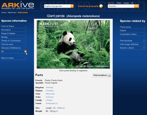 Arkive 3 Panda