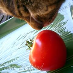 Bonnie meet Tomato