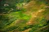 Huta-ginjang rice field (Sayid Budhi) Tags: lake green nature indonesia guide ricefield paddyfields sawah stockphoto laketoba stockimage northsumatra photostock danautoba terracefield tobalake adventurephotographer tapanuliutara hutaginjang bestplacetovisitindonesia indonesianguide panatapanhutaginjang sumateranguide photographerguide bestplacetovisitsumatera