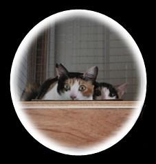 cat (53).jpg