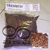 __Trembesi500c (Ronyps) Tags: pohon bibit samaneasaman penghijauan lebbeck benihtrembesi kihujan