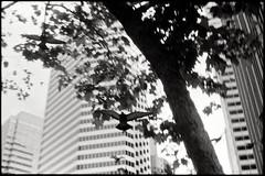 Chasm II (Suguru Nishioka) Tags: sanfrancisco city bw film birds fly nocrop nogearinfo chasmoflightandtime
