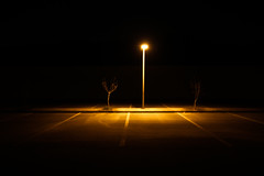 The View We Share (Universal Stopping Point) Tags: lines dark dead parkinglot streetlight nighttime barren saudiarabia dhahran saplings scraggly outsidemyapartment