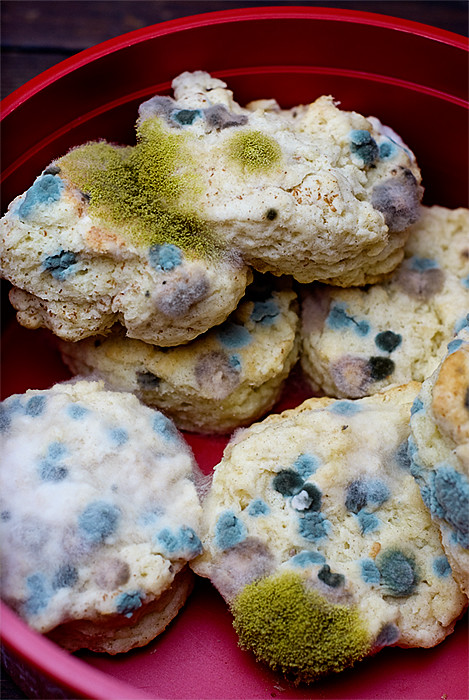 moldy biscuits