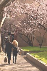 Ramble in the city (kth517) Tags: australia melbourne  plumblossoms   williamst latrobest