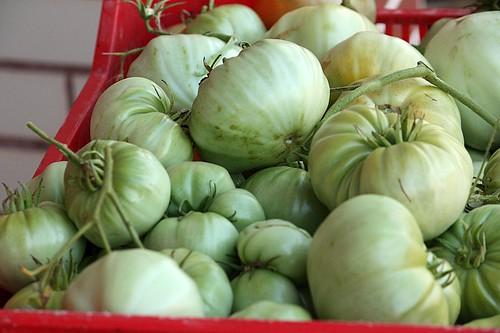 maraton ladja, zelene pomidore 068