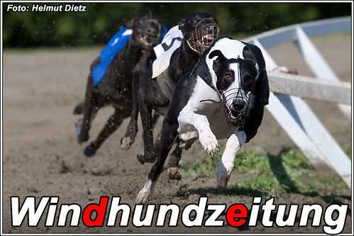 FCI-Windhund-WM-2010