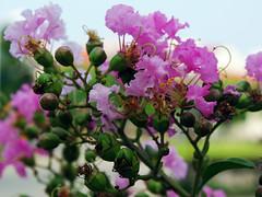 Flowers-39