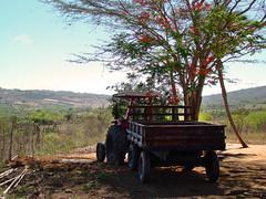 Trator (Anselmo Garrido) Tags: brasil stock bahia nordeste flickrstock araci