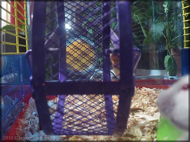 P1110884_hamster