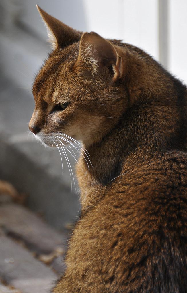 見返り美人の猫の横顔