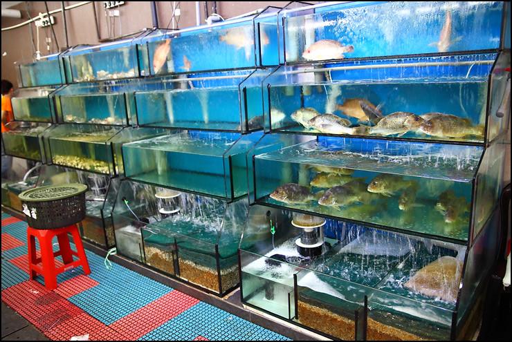 fish-tanks