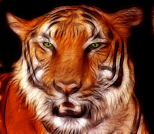 tiger portrait by Franomilano