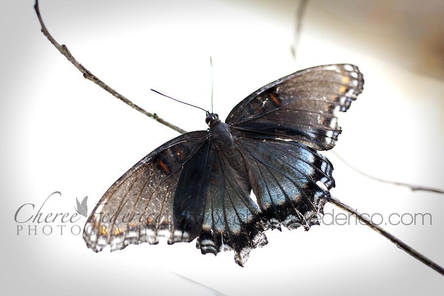 Butterfly on a tree limb.
