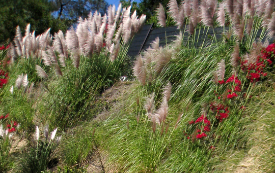 feather plants in the hills + los angeles