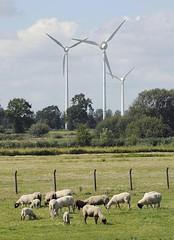 Windkraftanlage bergedorf