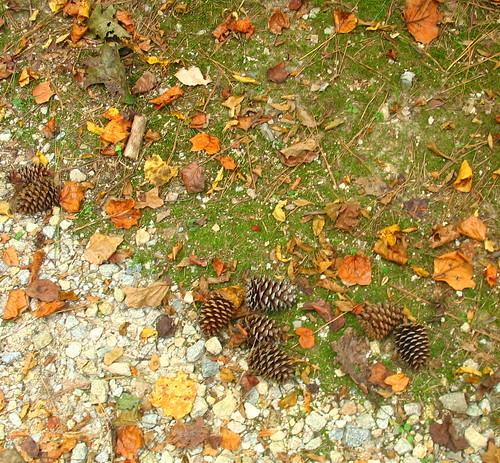 natnote pineconelvrck