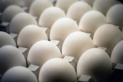 鶏卵の画像 p1_16