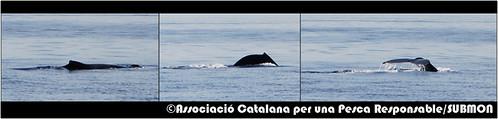 Balena amb gep davant de Torredembarra