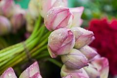 Quelques gouttes de pluie (hubertguyon) Tags: fleurs aux calcutta inde bengaleoccidental occidentalcalcuttaindemarch fleursmarch marchindiawestbengalflowermarketraindroppluiegouttemarchfleursbengale
