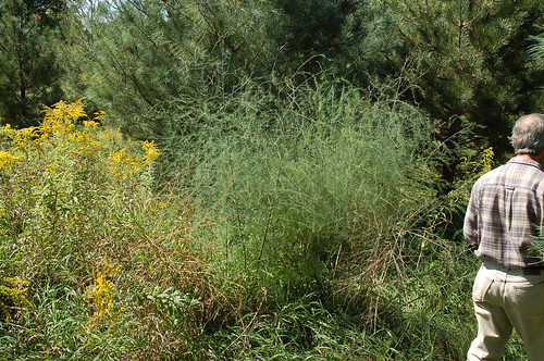 "Wild Asparagus <a style=""margin-left:10px; font-size:0.8em;"" href=""http://www.flickr.com/photos/91915217@N00/4997181533/"" target=""_blank"">@flickr</a>"