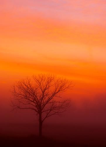 Redskytree tall