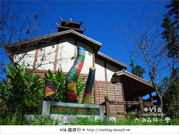 【溪頭一日遊】森林中的夢幻校園~內湖森林小學5