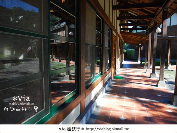 【溪頭一日遊】森林中的夢幻校園~內湖森林小學17