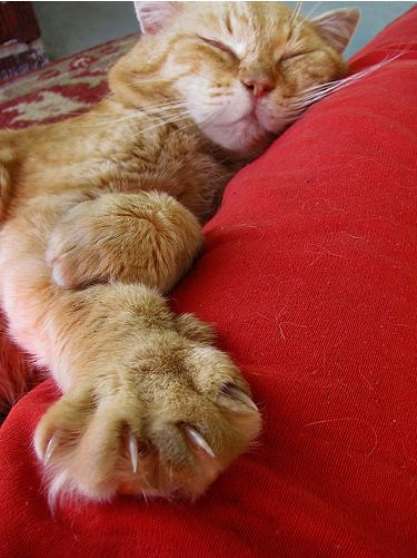 cute ginger cat sleeping