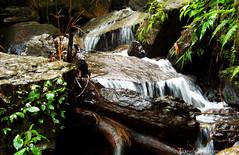 DSCN0496 (Tarek_Mahmud) Tags: waterfall bandarban