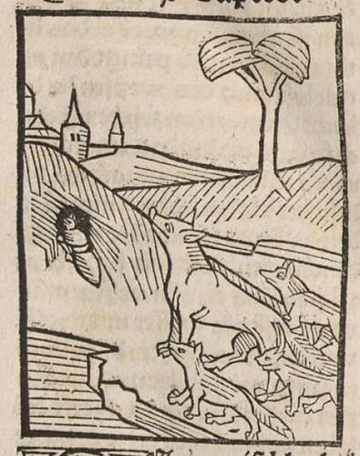 0110 De formica et vulpe