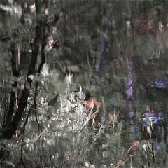 Daylilies in a dark world...!!! (Denis Collette...!!!) Tags: trees wild canada flower reflection tree art fleur reflections river philosophy rivière reflet arbres québec rivers impressions arbre reflets photosafari impression impressionist daylilies sauvages sauvage philosophie impressionists rivières portneuf wildriver impressionistes impressionniste hémérocalles deniscollette pontrouge rivièresauvage rivièressauvages photossafari