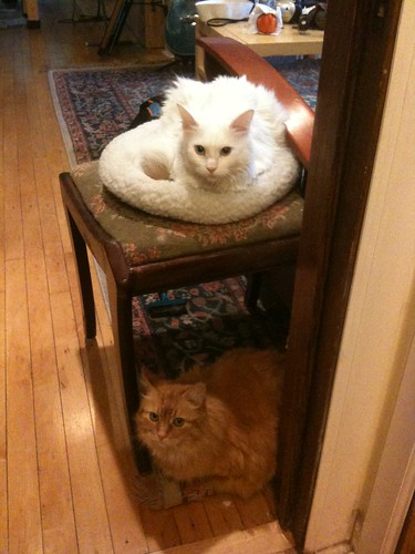Double Decker Kitties