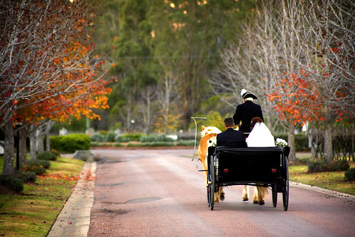 Studio Valentine Photography - Horse and Cart at Peppers Convent